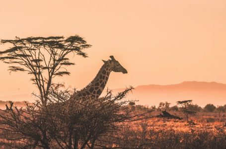 The best types of cameras for safari